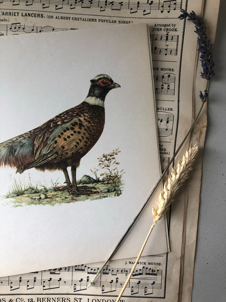 1960s bookplate / original print of a Pheasant