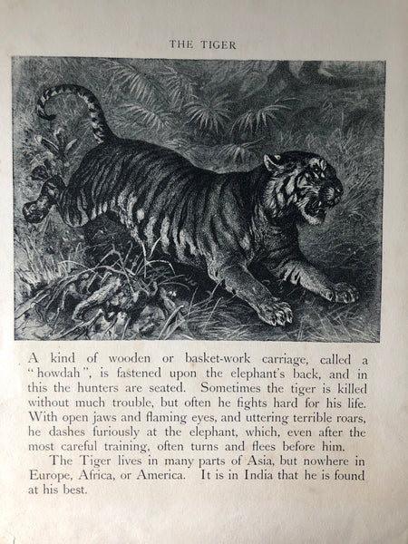Original Tiger Sketch Bookplate