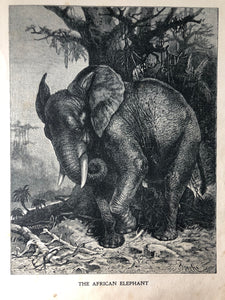 Original Elephant Sketch Bookplate