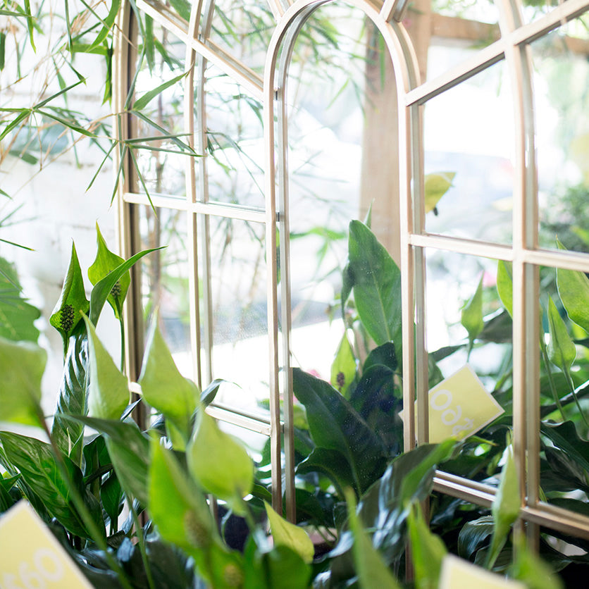 A definitive list of the 10 best indoor plants
