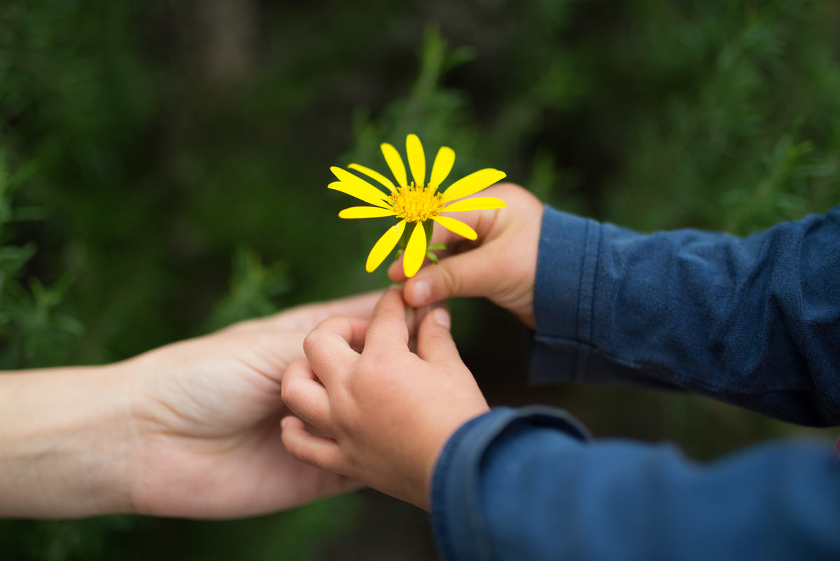 5 Benefits of Giving and Receiving Flowers