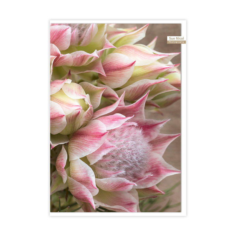 Blushing Bride Greeting Card
