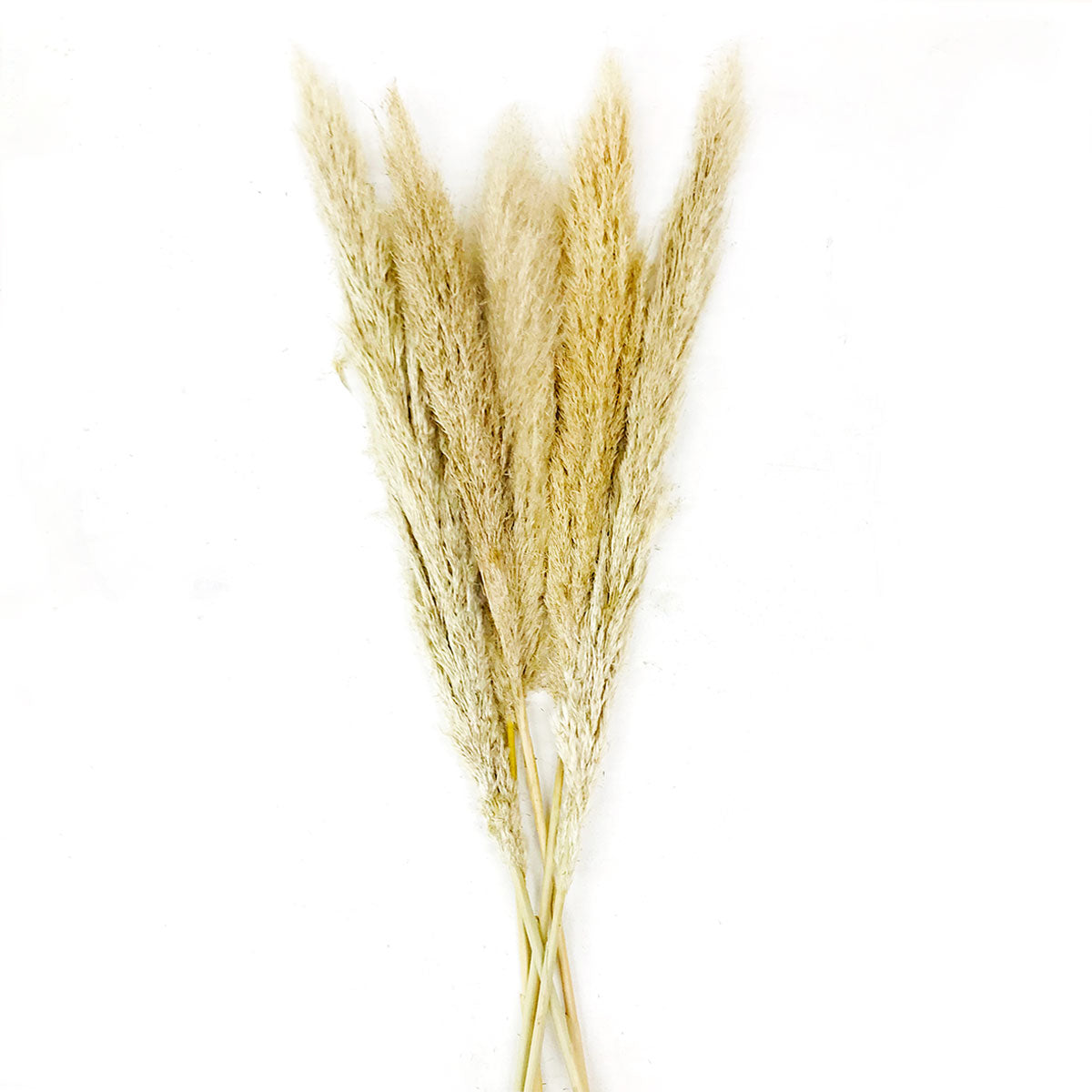 Buy Pampas Grass Online Same Day Flower Delivery Melbourne Amazing Graze Flowers
