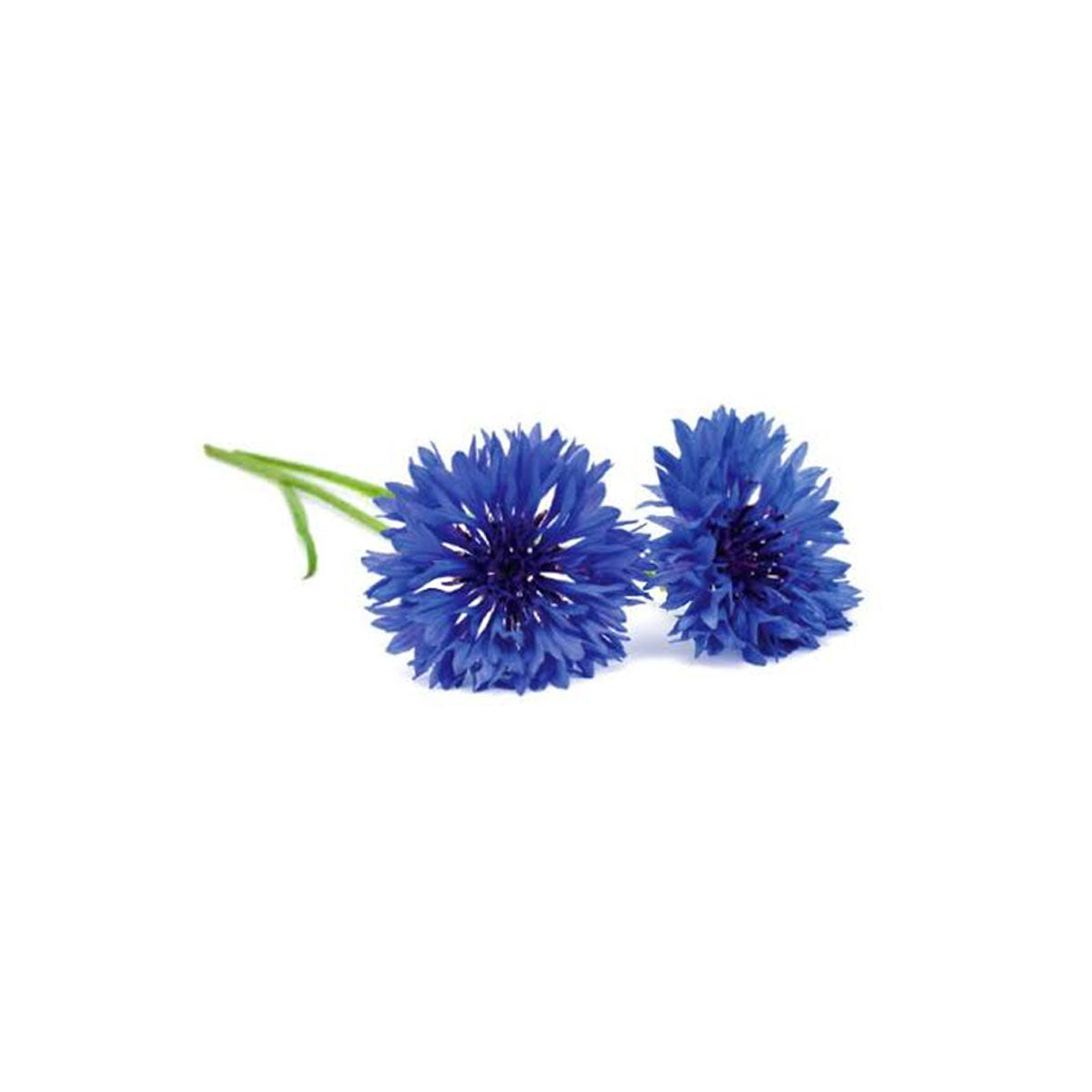 Blue Cornflower Buttonhole