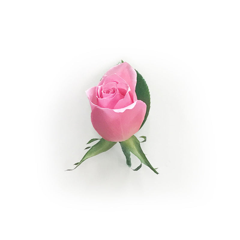 Pink Rose - Buttonhole