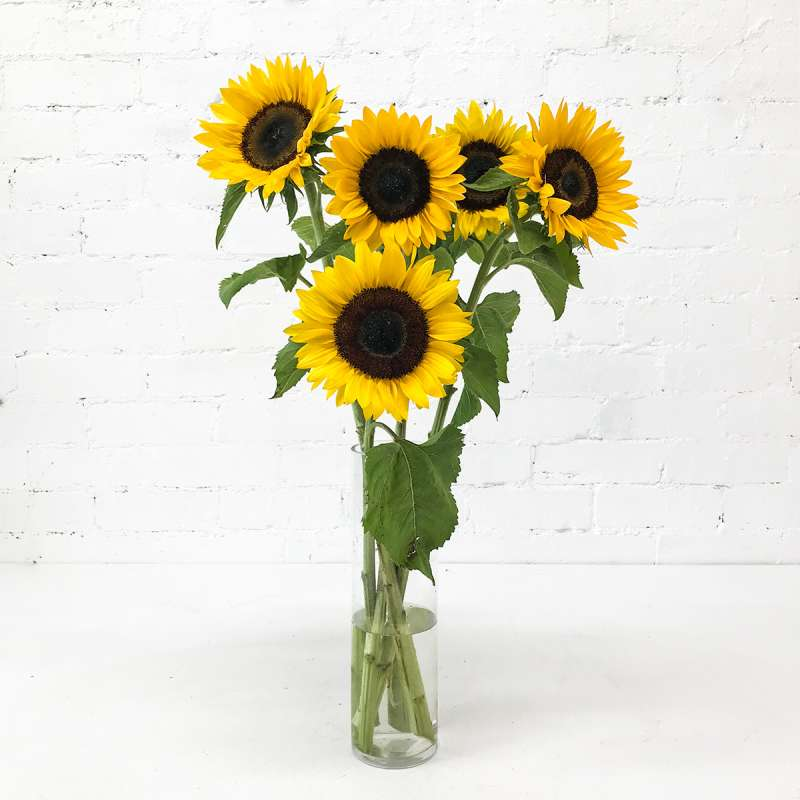 Buy Sunflowers