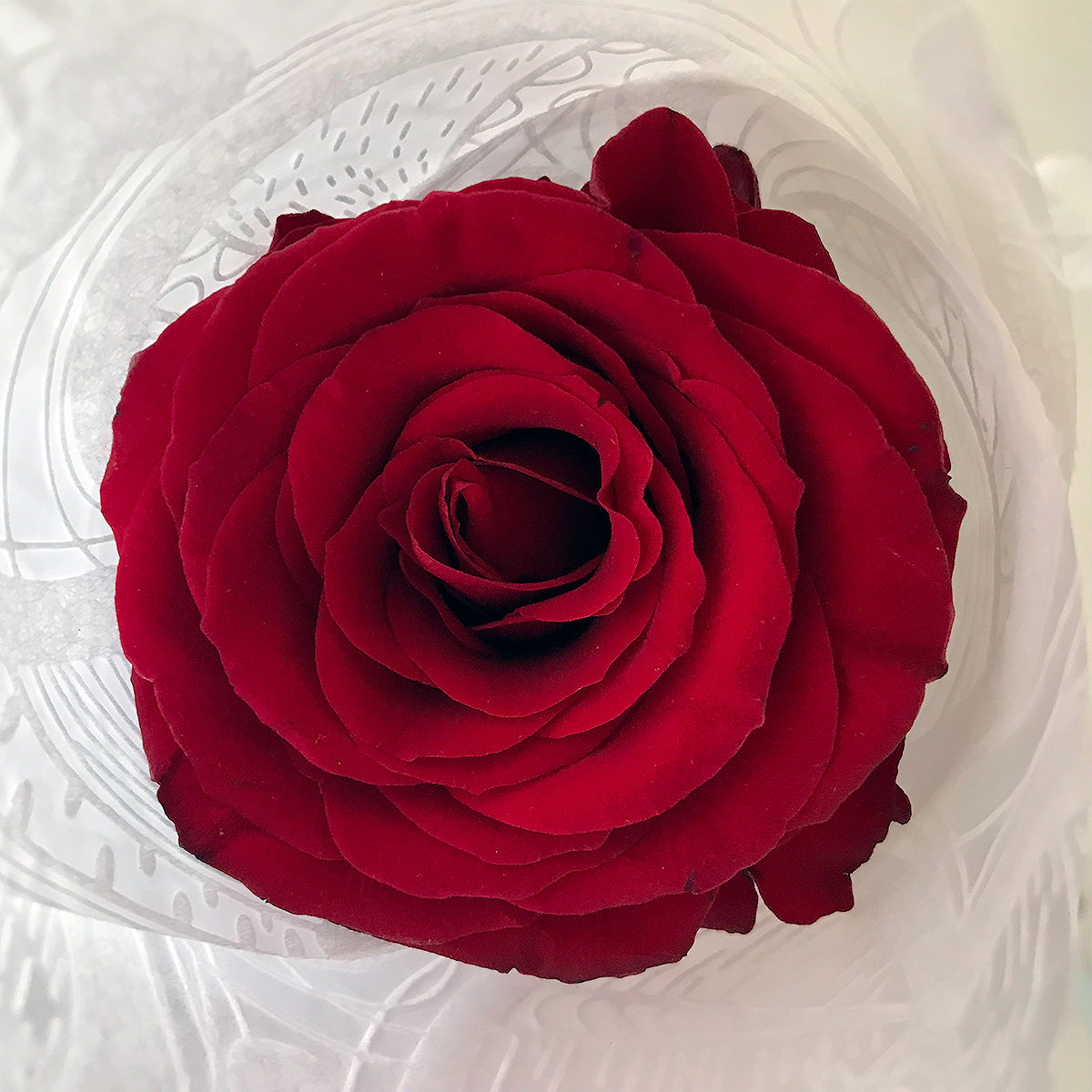 Red Rose - Single Long Stems