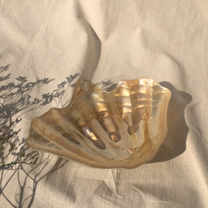 Tinted glass shell bowl