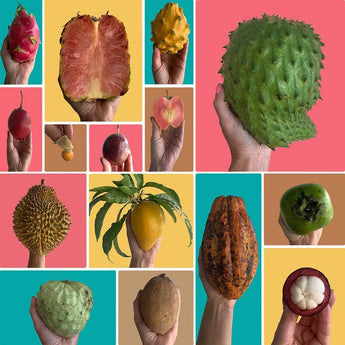 Create Your Own Exotic Fruit Box Tropical Fruit Box Produce Box 00879502008643