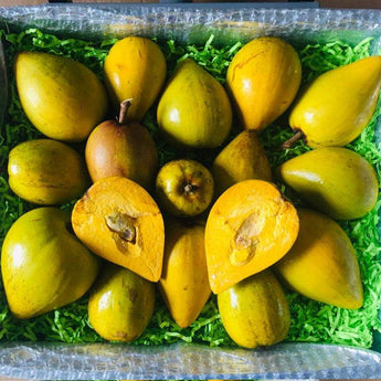 Eggfruit | Canistel | Yellow Sapote Box Tropical Fruit Box Specialty Box Large Box (8 Pounds) 00879502004430