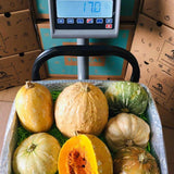 Haitian Joumou Squash Box Tropical Fruit Box Produce Box 00879502004454