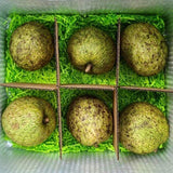 Mountain Soursop Box Tropical Fruit Box