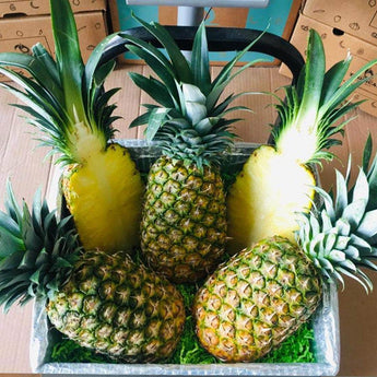 Premium Tropical Pineapple Box Tropical Fruit Box Produce Box 00879502009244