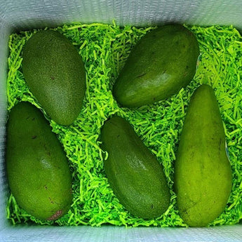 Tropical Avocado Tasting Box Tropical Fruit Box Produce Box