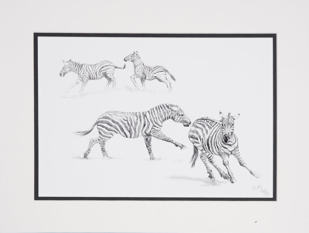 Zebra running limited edition print