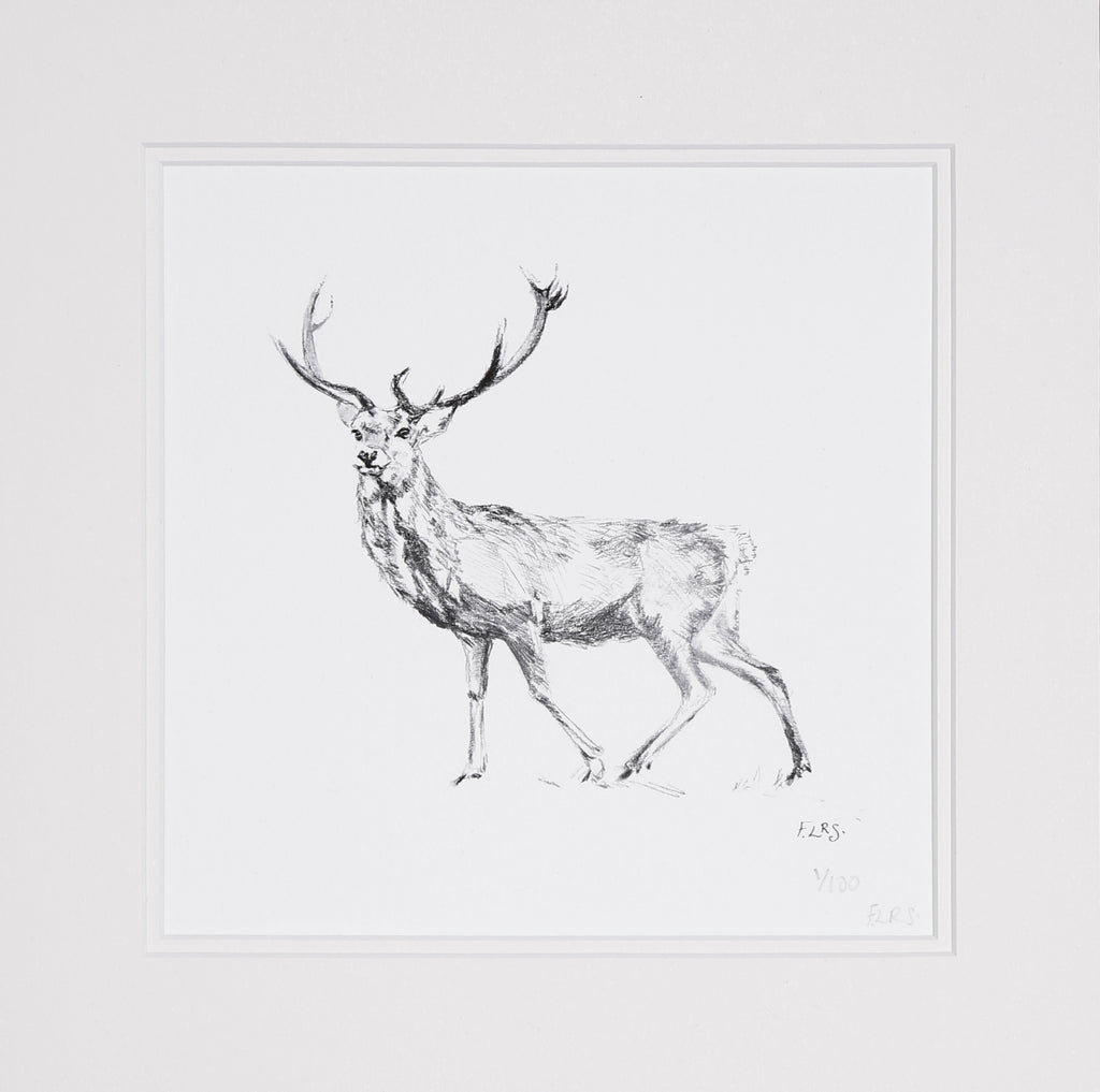 Stag pencil study, limited edition print