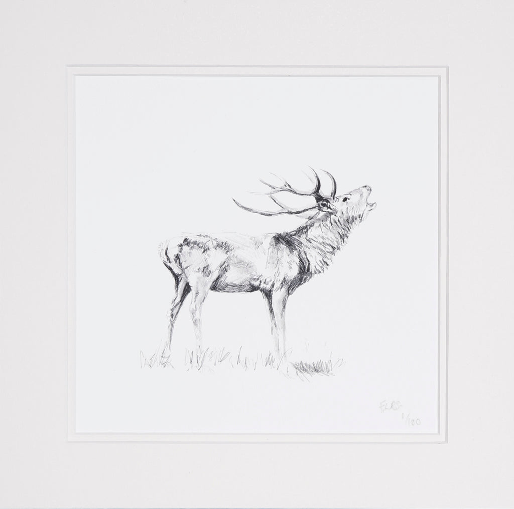 Stag bellowing pencil study, limited edition print