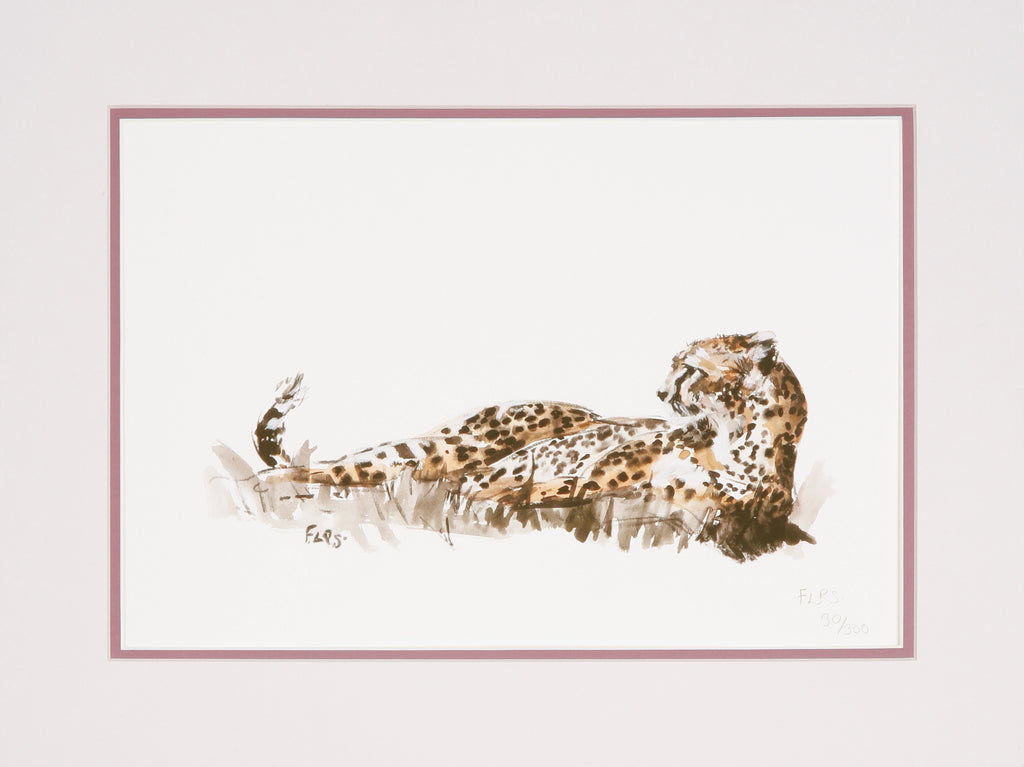 Cheetah print in colour, limited edition