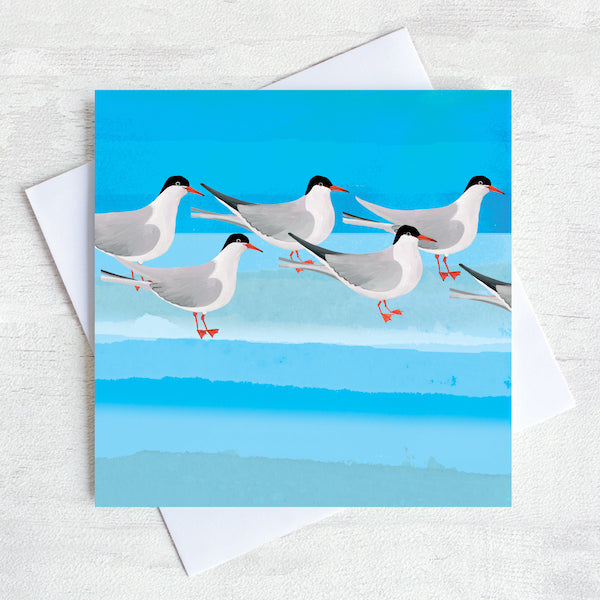 Arctic Terns sea bird Greetings card
