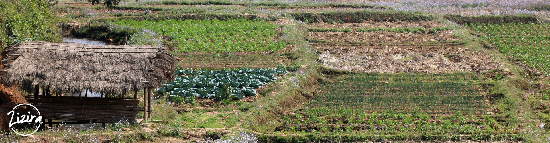 Meghalaya Government Schemes for Agriculture for Farmers and Unemployed Educated Youth