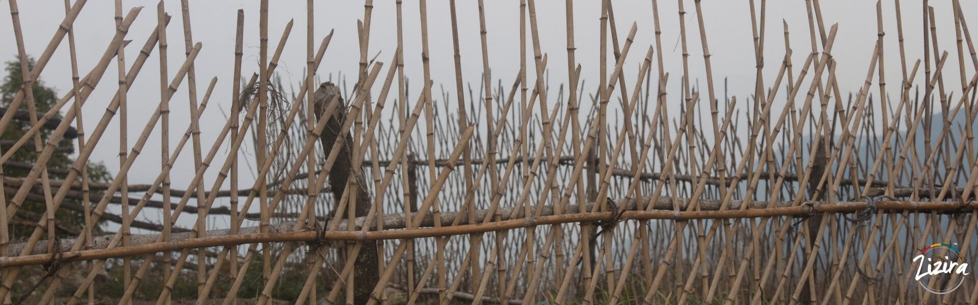 7 Reasons Why Bamboo Farming Can Save the Environment