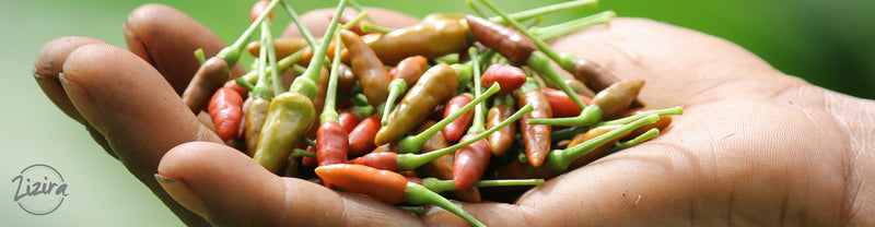 Bird's Eye Chilli Of Meghalaya - From Dulongnar Village