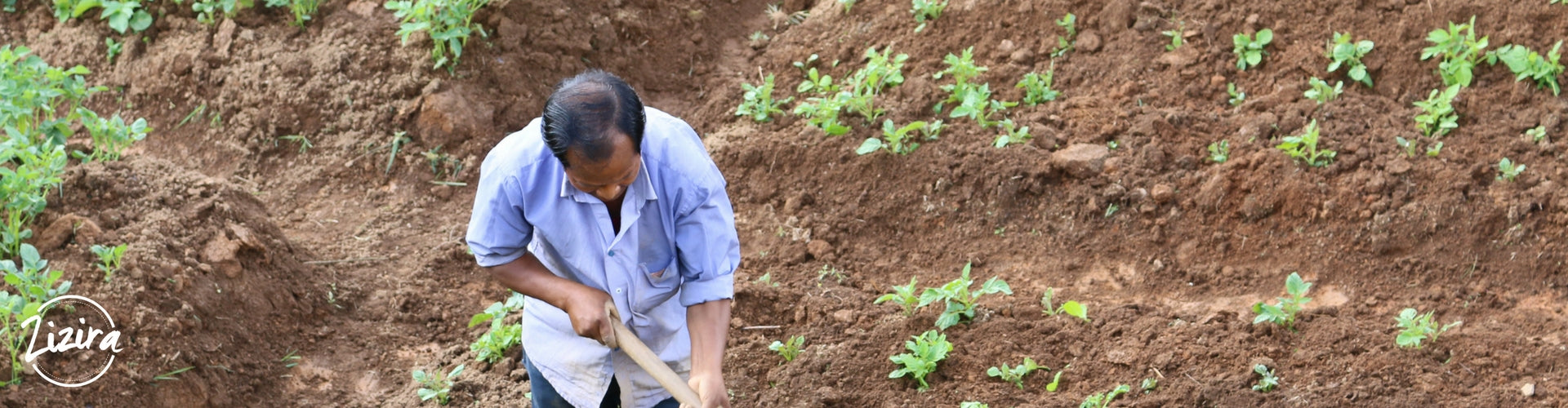 What I Learned from a Ginger Farmer in Meghalaya