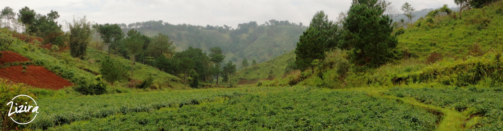 Meghalaya Going Organic – No Turning Back