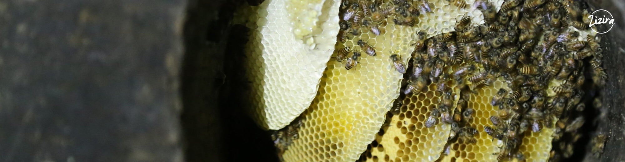 Visit to a Honey Bee Farm | Zizira