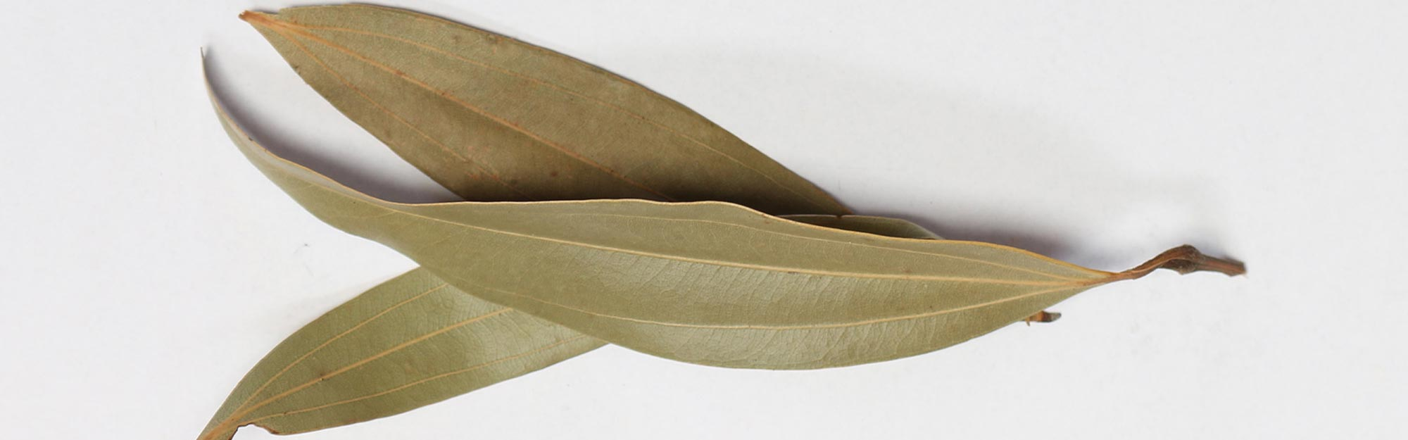 Bay Leaf for Diabetes - Find Out How Good