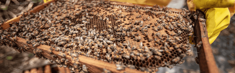 Ethical methods of beekeeping in Meghalaya