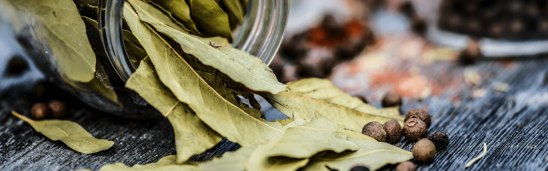 Bay Leaf from Meghalaya