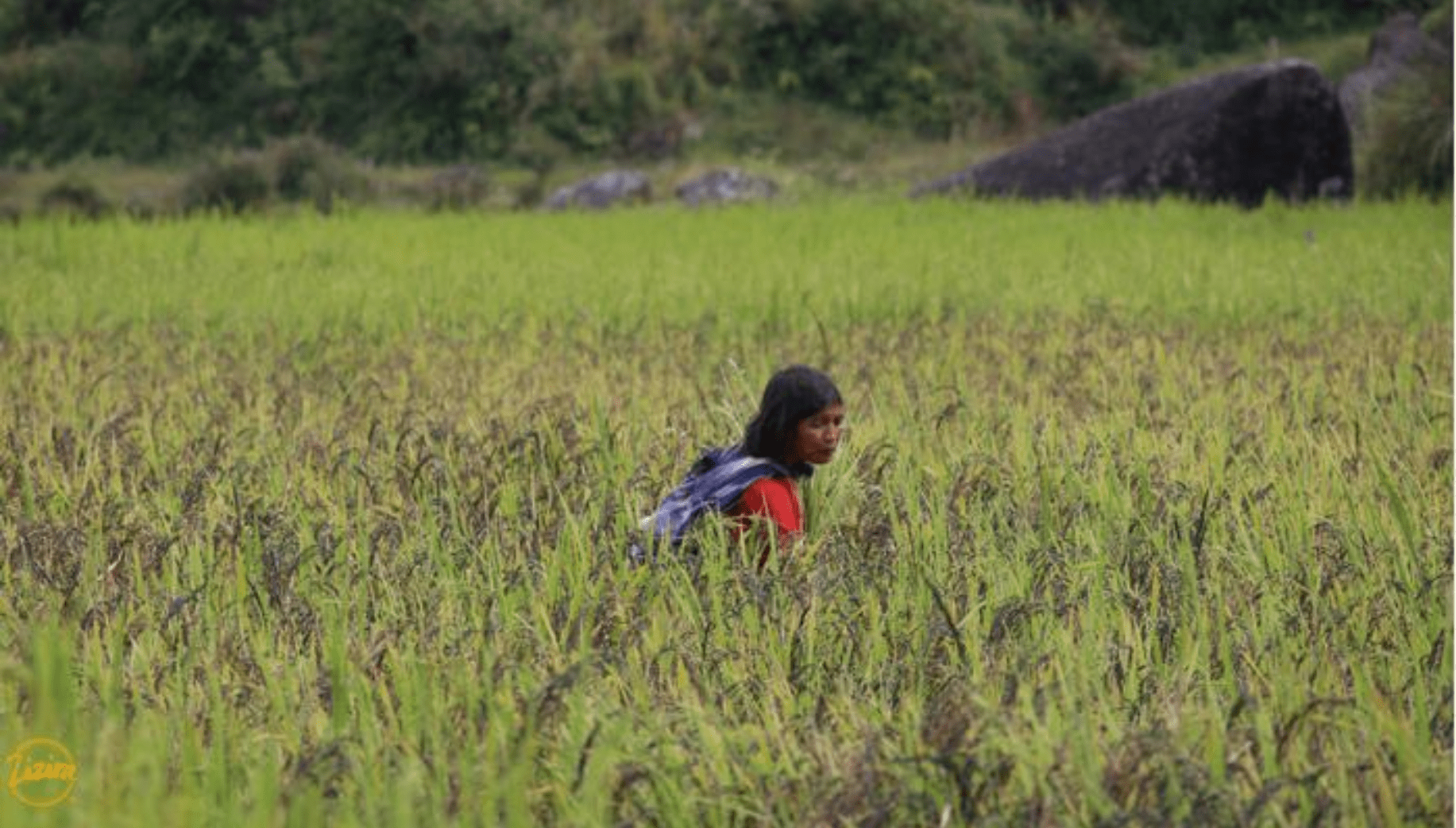 Woman from Meghalaya village in her field