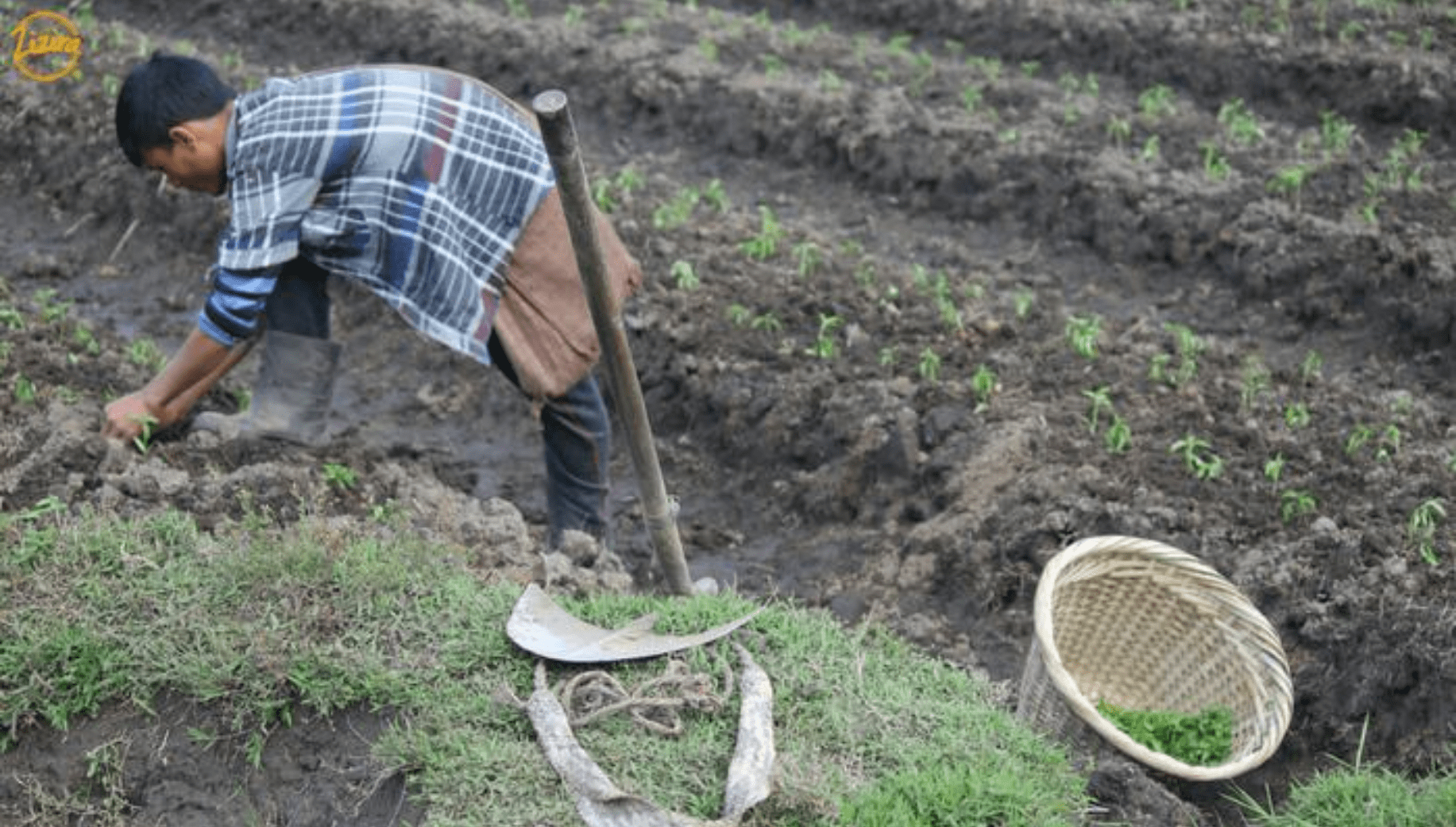 Farmer in Meghalaya practicing shifting cultivation