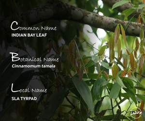 Bay leaf in different languages