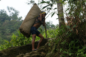 Farmer  carrying a sack of bay leag