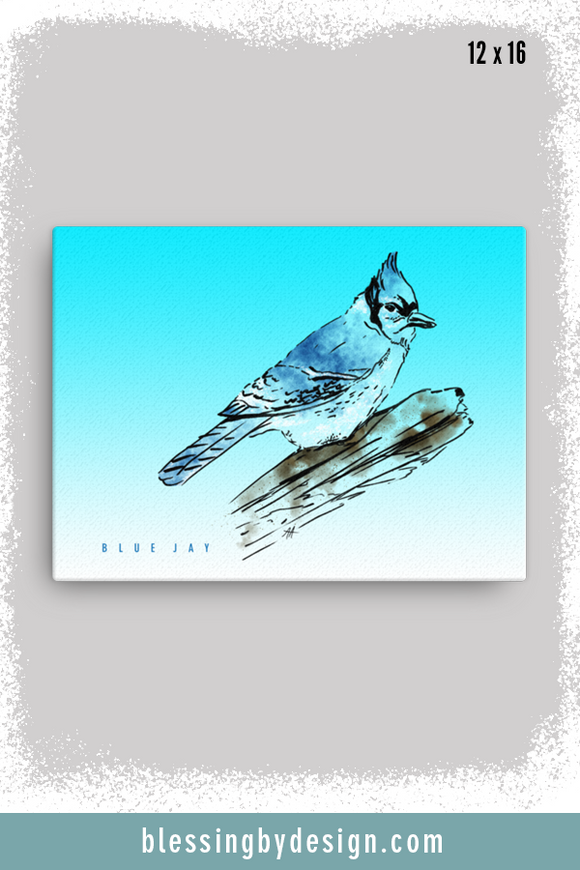 Texas Critters Blue Jay | 12x16 Canvas Print