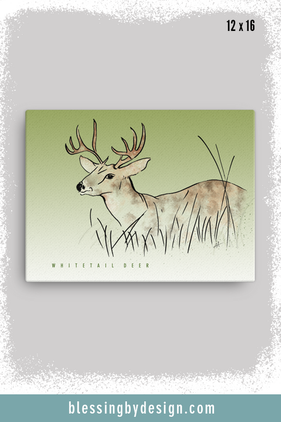 Texas Critters Deer | 12x16 Canvas Print