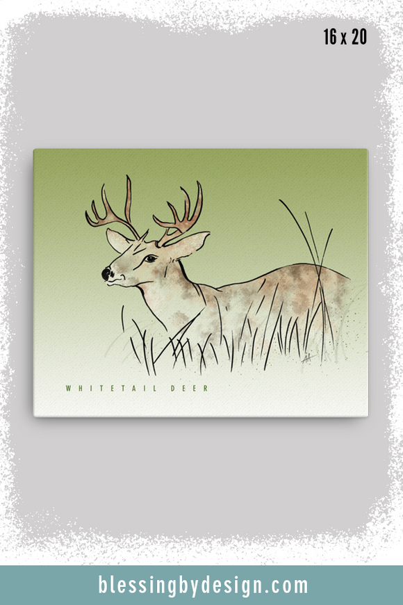 Texas Critters Deer | 16x20 Canvas Print