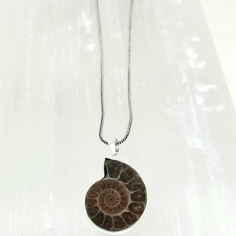 Ammonite ~ by Alula Boutik - alter8.com