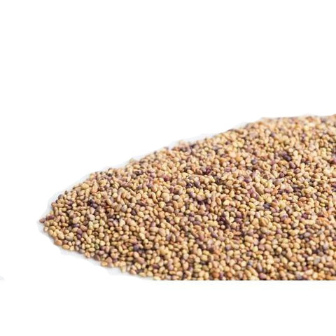 Red Clover Sprouting Seeds - alter8.com