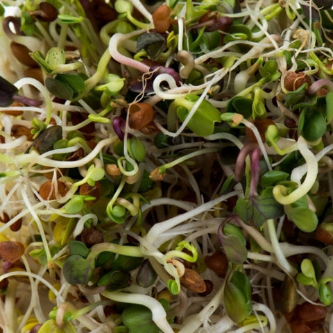 Spicy Lentil Crunch Sprouting Seeds Mix (CA) - alter8.com