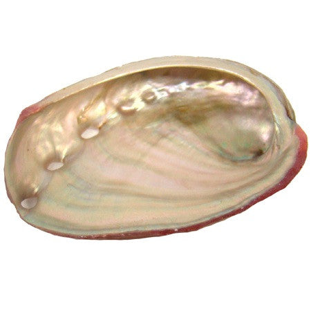 Small Red Abalone Shell - alter8.com