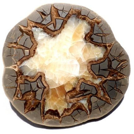 Septarian Nodule Slabs - alter8.com