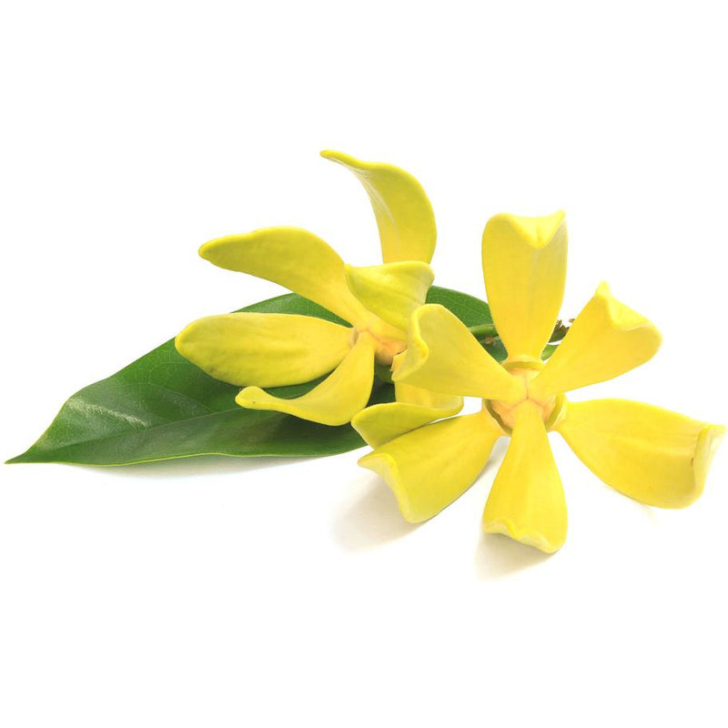 Ylang Ylang Essential Oil - alter8.com