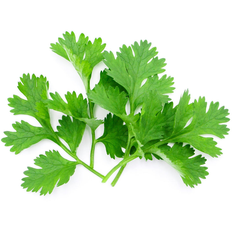 Coriander Essential Oil - alter8.com