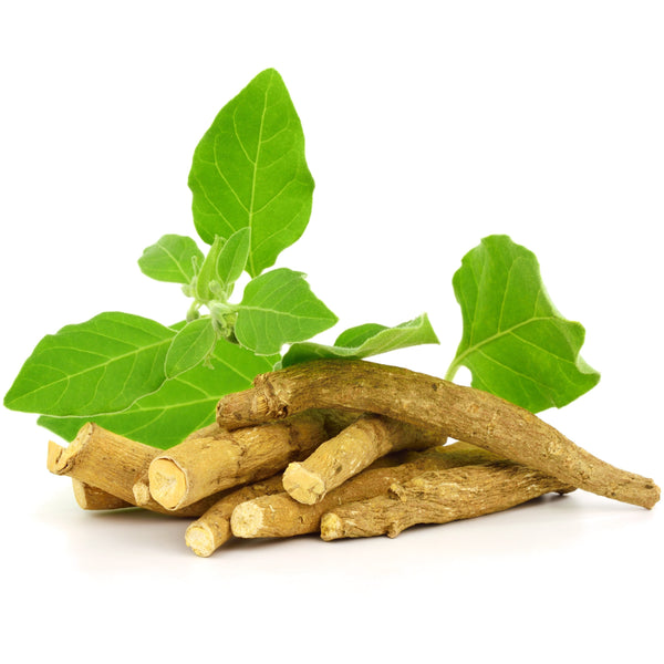 Ashwagandha Root Pieces - alter8.com