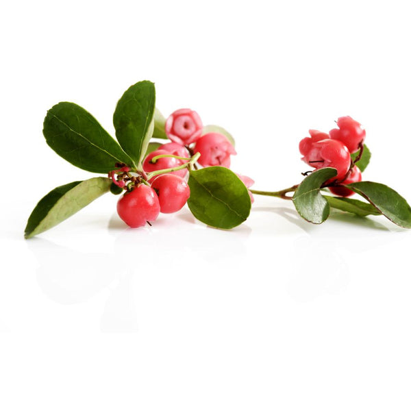Wintergreen Essential Oil - alter8.com