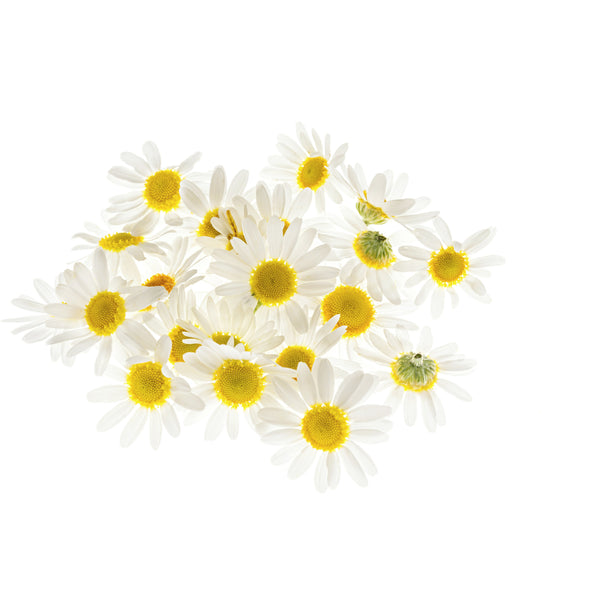 Roman Chamomile Essential Oil - alter8.com