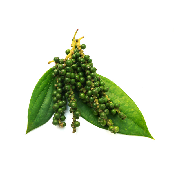 Black Pepper Essential Oil - alter8.com